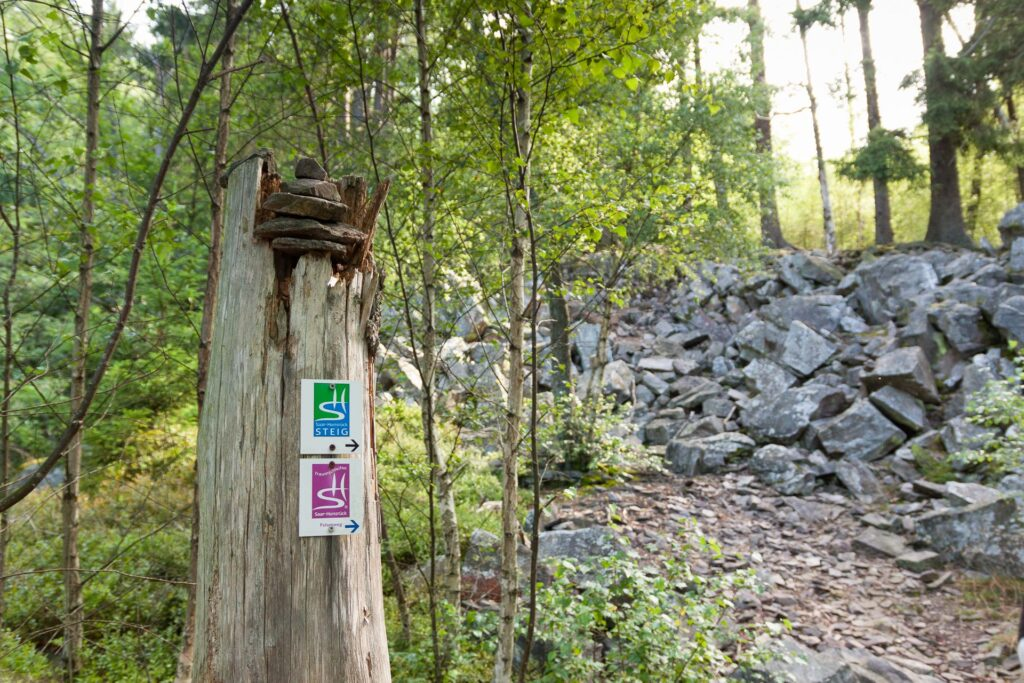 Wanderweg Markierung Felsenweg und Saar-Hunsrück-Steig an einem toten Baum